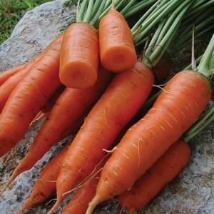 Carrot Seeds (Gaajar)