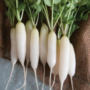 Radish Seeds (Mulli)