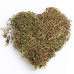 Natural Dried Moss Grass