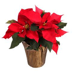 Poinsettia Red Gift Plant