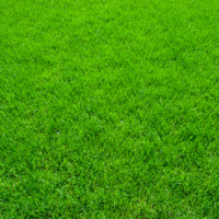 Natural Lawn Laying