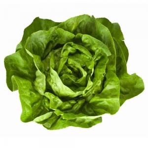 Lettuce Imported Seeds