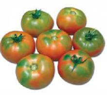 Tomato PKM 1 Seeds
